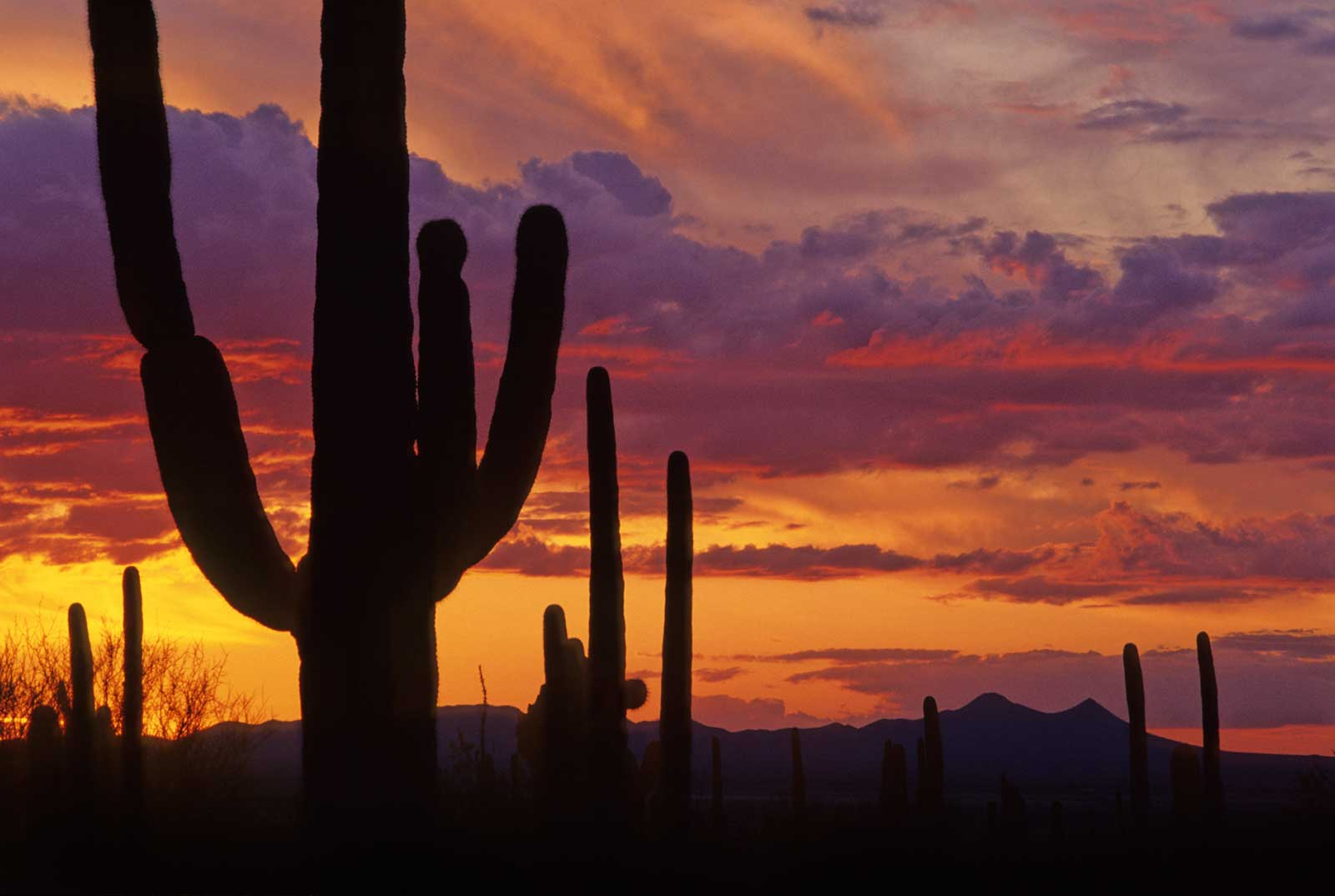 Saguaro National Park Tucson Attractions